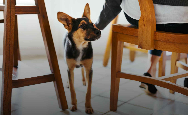 Ein Hund steht neben einem Stuhl, eine Hand streichelt ihn.